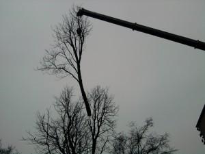 boom demonteren met een telescoopkraan