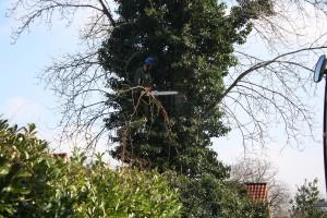 telekraan rosmalen rooien (15)