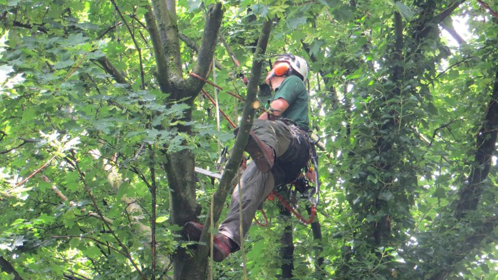 nieuwe joris delsasso boomverzorging (2) (1)