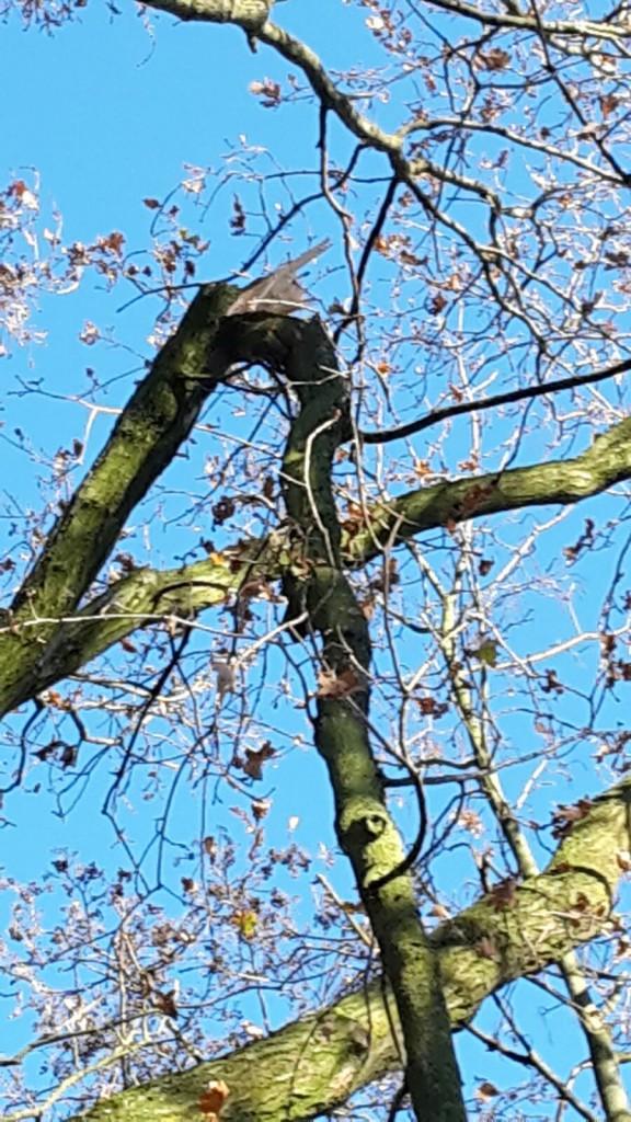 afgebroken-boomtak-door-stormschade-rosmalen