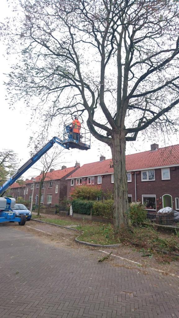 groenvoorzienings-nijmegen-delsasso-boomverzorging