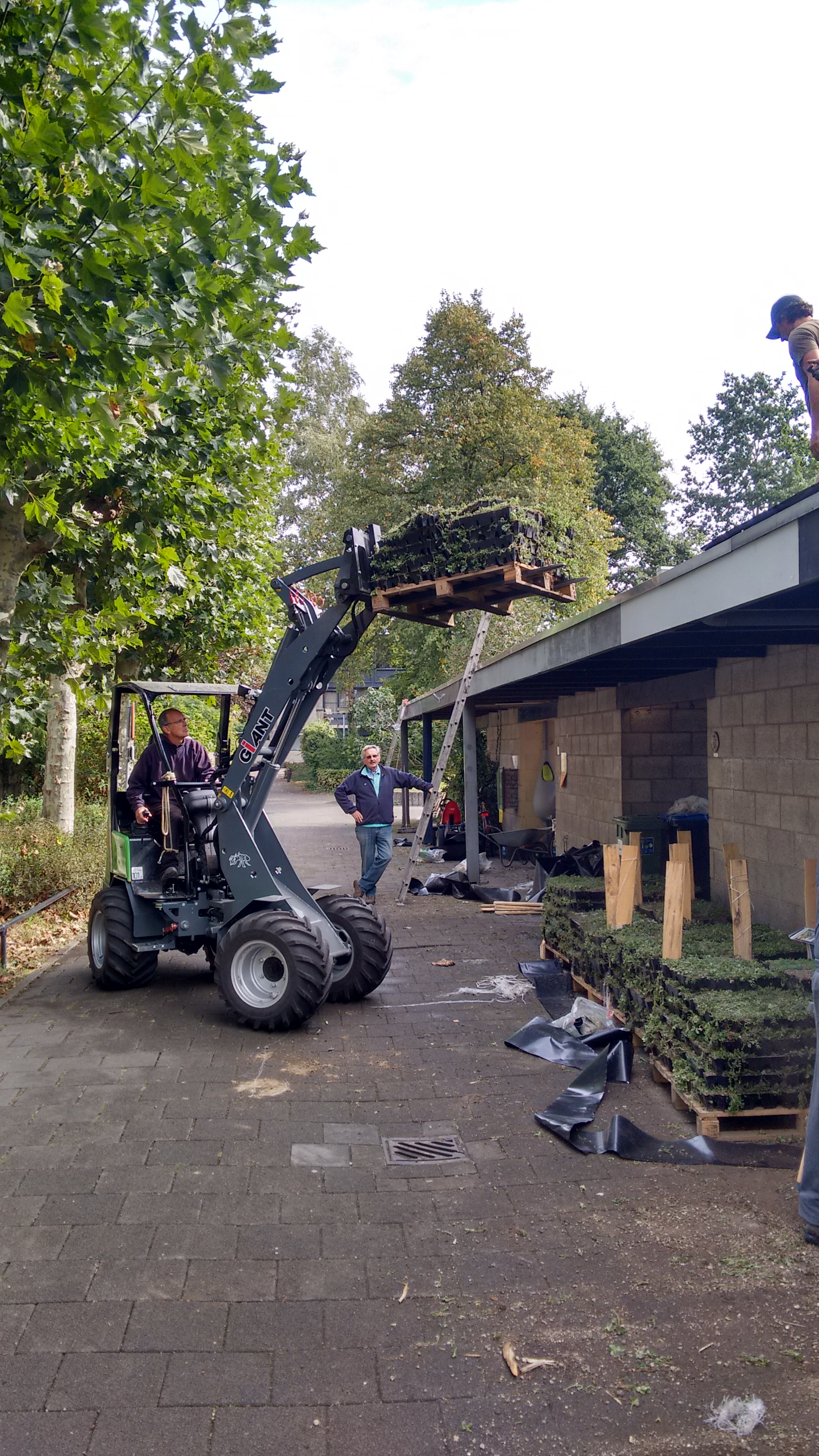 Duurzaam groen dak brabant Rosmalen 2